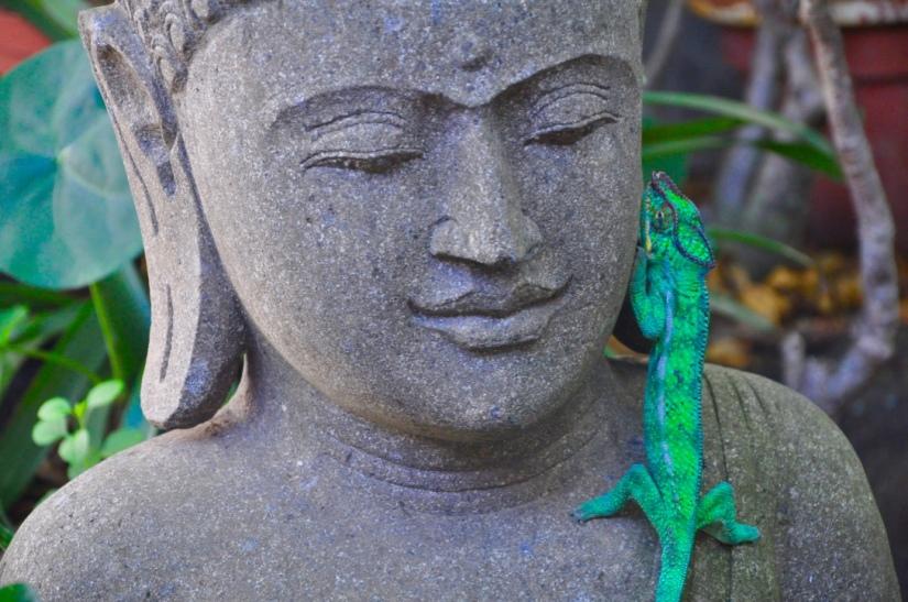 bouddha-caméléon